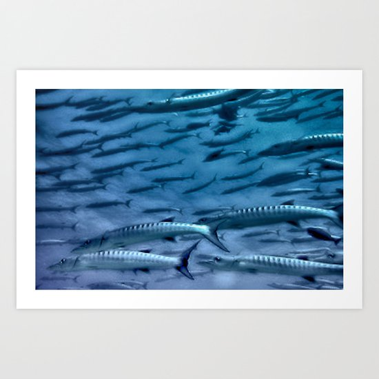 Barracuda! Art Print