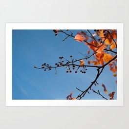 Bradford Pear in Fall Art Print