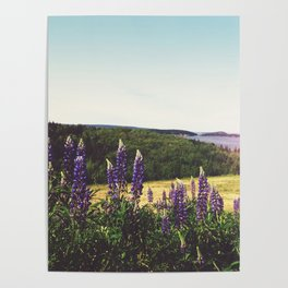 Lupine Flowers of the Maritimes Poster