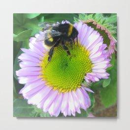 Bees love purple daisies Metal Print
