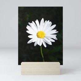 Sunlit Shasta Daisy Mini Art Print