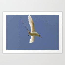 Bird Diving Art Print