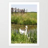 swan Art Prints featuring Swan by Kakel-photography