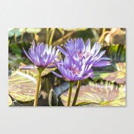 Lavender Lilies Canvas Print
