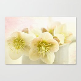 Hellebores in blue jug Canvas Print