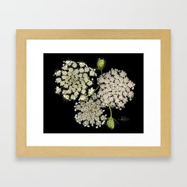 Queen Ann's Lace, Scenography Framed Art Print