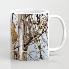 Baby Red Squirrel Coffee Mug