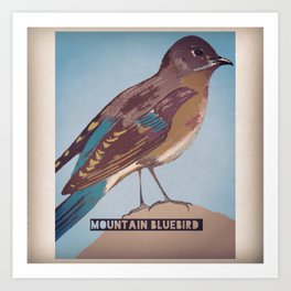 Mountan Bluebird Art Print