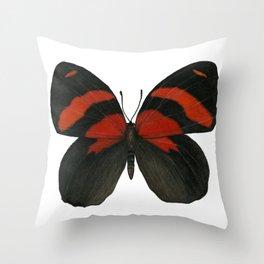 BD Butterfly Throw Pillow