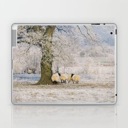 Sheep gathered under a tree covered in a thick hoar frost. Norfolk, UK. Laptop & iPad Skin