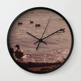 ADULT AND BABY MALLARD DUCKS ON JUANITA BAY, LAKE WASHINGTON AT KIRKLAND NARA 552221 Wall Clock