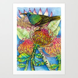 Sunbird Art Print