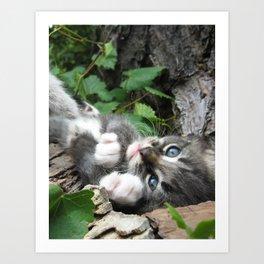 Kitten_01 Art Print