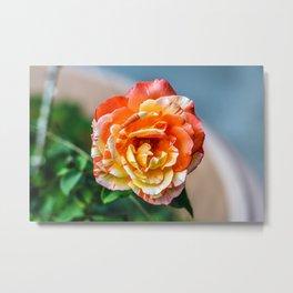 Portraits - Flowers #2 Coloured Metal Print
