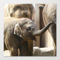 baby elephant Canvas Prints featuring Baby Elephant by Päivi Vikström