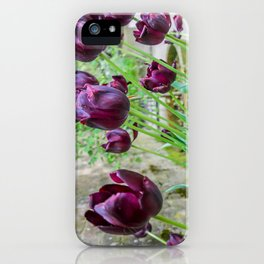 The Lost Gardens of Heligan - Black Tulips iPhone Case
