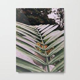 Palm Tree Leaves Metal Print