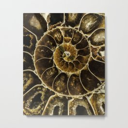 Detailed Fossil Metal Print