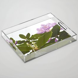 Pink Azalea Flowers with Spring Green Leaves Acrylic Tray