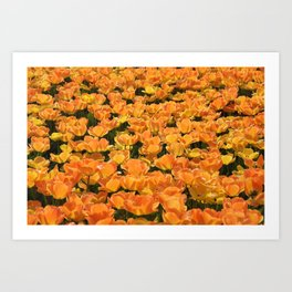 Holland- Tulip- Fields -Flowers Art Print