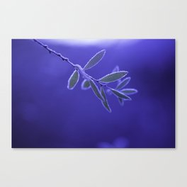 BLUEFROST Canvas Print