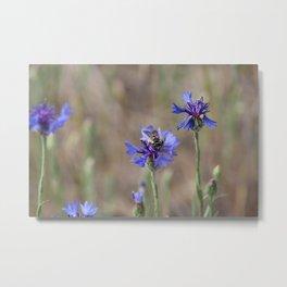 Purple Pollinator Metal Print