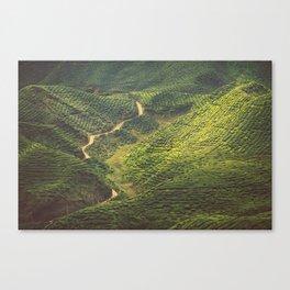 Asia 47 Canvas Print