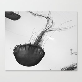 Jellyfish Silhouette  Canvas Print