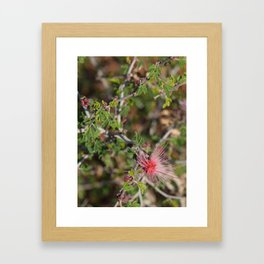 Desert Wildflower Bush Framed Art Print
