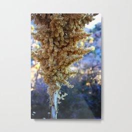 Desert Bloom Nolina Metal Print