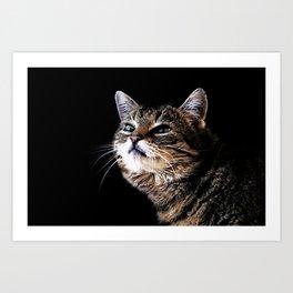 Lieschen Müller, Lilly the sweet tiger cat Art Print