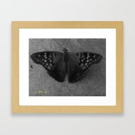 Black and White Butterfly Framed Art Print