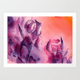 Iris, Pink, Purple, Peach Flowers Art Print