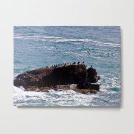Sea Birds on Rock in Sea Metal Print