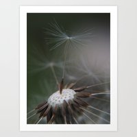 ready to fly Art Print