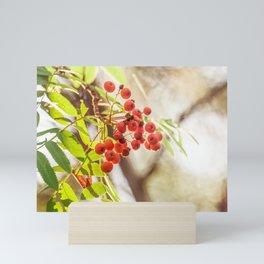 Rowan berries Mini Art Print