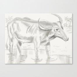 42- Indian Buffalo Canvas Print