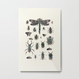 Collection of Insects Metal Print