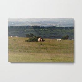 Wild Ponys in Cornwall Metal Print