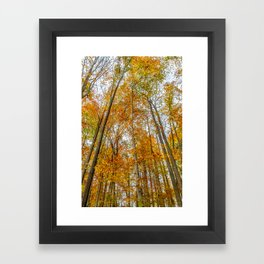 Reach High and Touch the Sky Framed Art Print