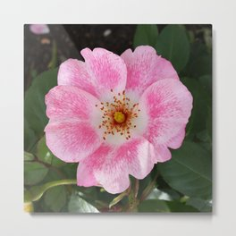 pink flower in the shade Metal Print