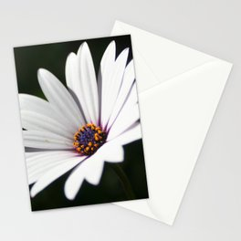 Daisy flower blooming close-up Stationery Cards