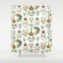 Ernst Haeckel - Scientific Illustration - Bryozoa Shower Curtain