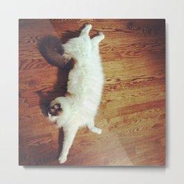 Ragdoll Cat Stretch Metal Print