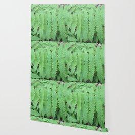Fern Symmetry Wallpaper