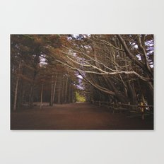 Light Fall Canvas Print