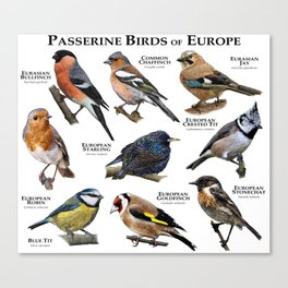 Passerine Birds of Europe Canvas Print