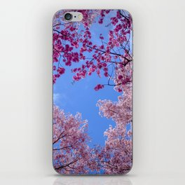 Cherry blossom explosion iPhone Skin