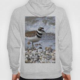 Shore Bird Hoody