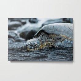 Turtle on a Black Sand Beach in Hawaii Metal Print